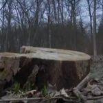 Активисны предлагают присвоить Чернечему лесу статус парка