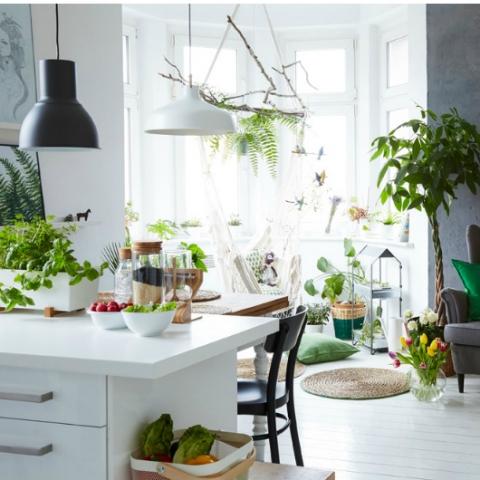 Фитодизайн квартиры: как растения работают в домашнем интерьере