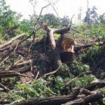 Генпрокурор вмешался в ситуацию з застройкой парка «Голосеевский»