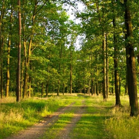 Из-за служебной халатности земли лесного фонда отошли к частникам