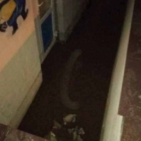 Из-за таяния снега в Киевской области затопило жилую многоэтажку