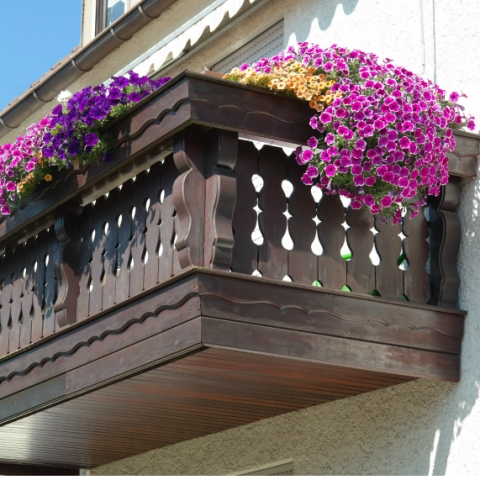 Клумба на балконе: подбираем цветы