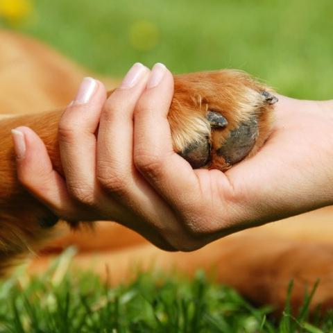 Когда в Киеве появится центр защиты животных