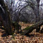 Под Киевом часть леса незаконно передали для строительства солнечной электростанции