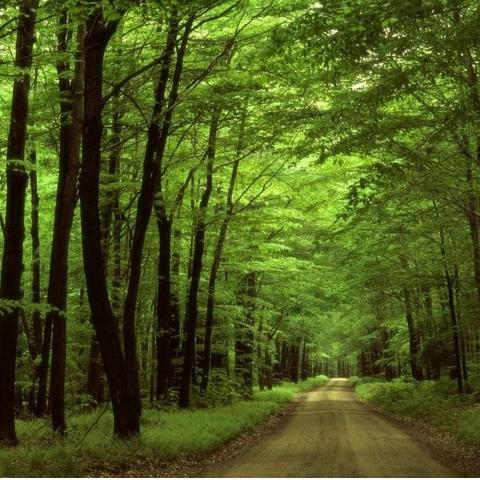 Прокуратура оспаривает в суде выделение земли лесного фонда под жилой дом
