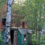 Суд позволил вести строительство в лесу под Киевом