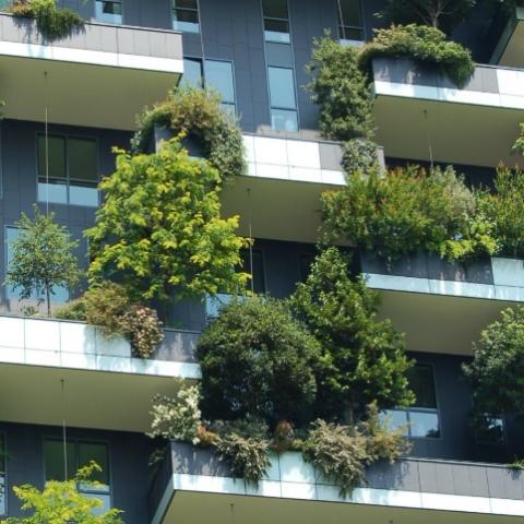 Свой сад в каменных джунглях. Растения на балконе