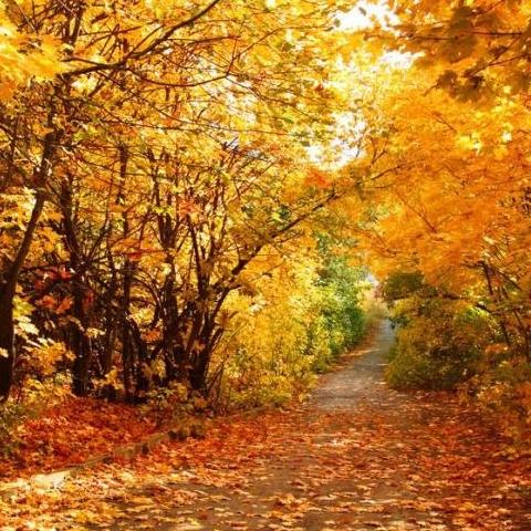 В Киеве планируют построить комплекс по переработке опавших листьев