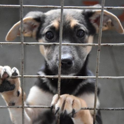 В Киеве планируют построить Центр защиты животных с приютом и крематорием