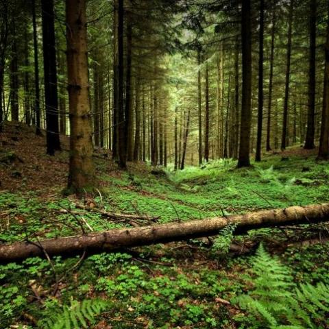 В Киеве запретили сплошную вырубку лесов