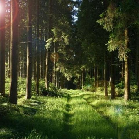 В Киевской области вернули в собственность государства 16 га леса