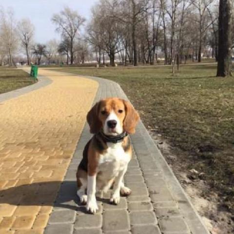 В столице запретили выгуливать собак возле школ и больниц