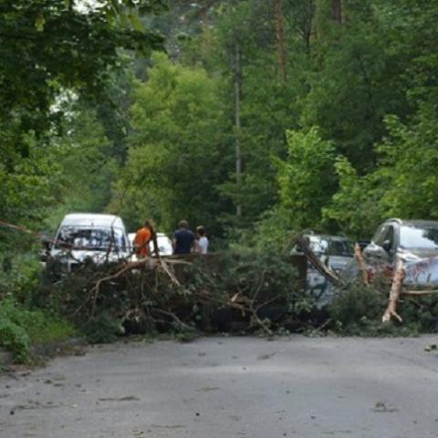 Веремеенко просит защитить лес от застройщика