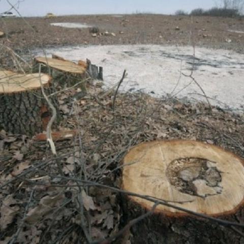За застройку лесов Киевской обл. предъявлено 456 исков